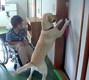 สิทธิคนพิการในอเมริกา